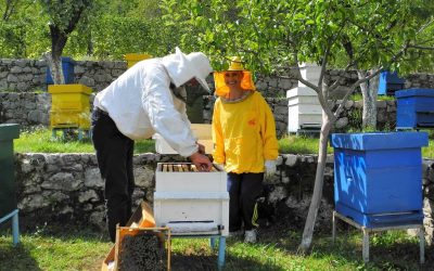 Lesson about beekeeping